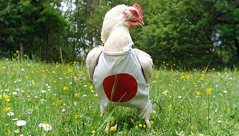 chickens-suit