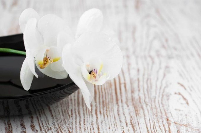 Orchids-spa-000037181920_Large